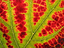 Fractals, chlorophyll and solstice - what's not to love about September?
