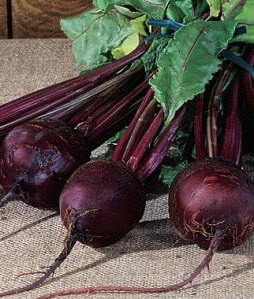 Detroit Red  beet from Burpee Seed catalog