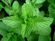 Mint - good for digestion and just plain tasty