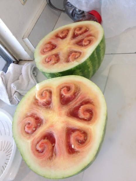Photograph of a 21st century unripe melon, sacrificed for science!