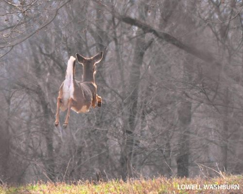 reindeer, flying