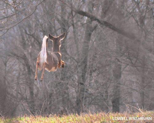 reindeer, flying