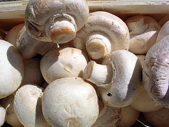 mushroom, white