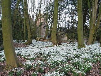 Snowdrops_Feb_2009BankHall Bretheton2009