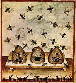 beehive27-alimenti,_miele,_Taccuino_Sanitatis,_Casanatense_4182.