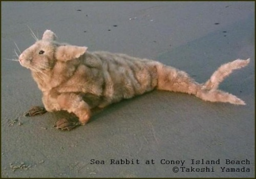 Rabbit, sea