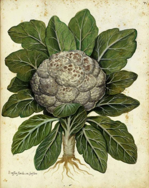 Botanical-Cauliflower-Italian-780x990