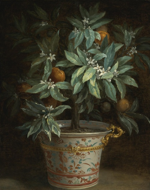 oudry_orange_tree