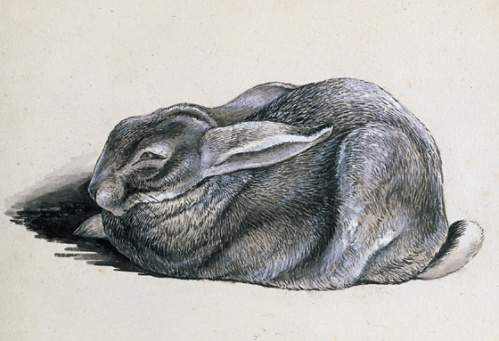 Rabbit study by Beatrix Potter